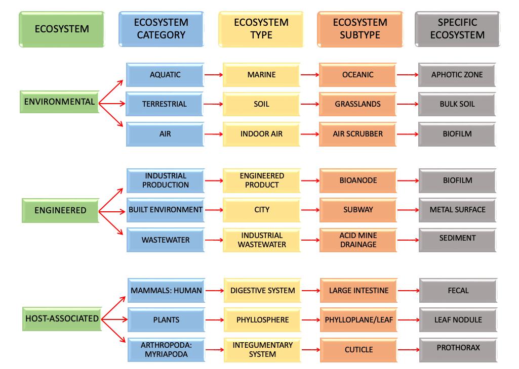 sample1 eco path